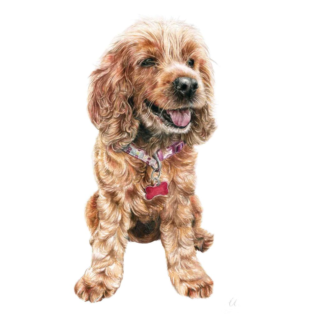 Amber Dog Portait