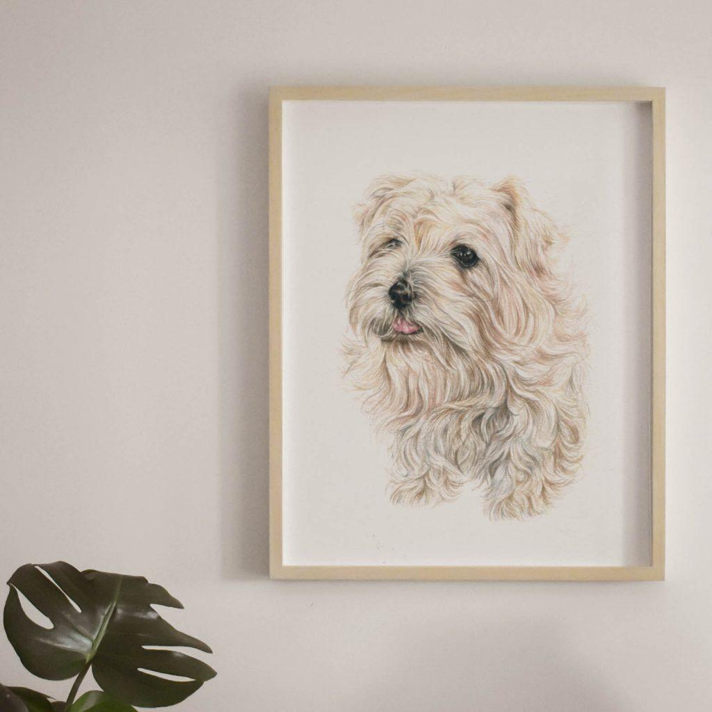 Brynn Dog Portrait